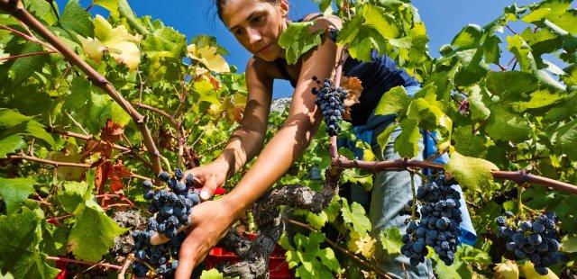 Island Hvar & wine tasting
